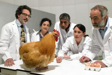 Scientists stare at a chicken